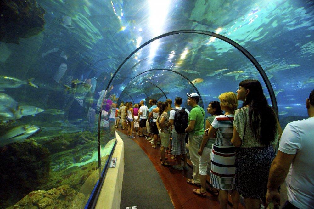 Barcelona Aquarium Barcelona Blog
