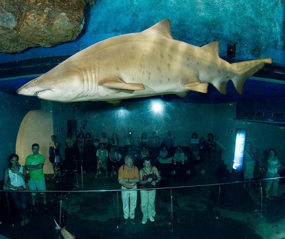 Barcelona aquarium barcelona home blog for Aquarium de barcelona