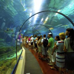 barcelona-aquarium-busy-with-visitors