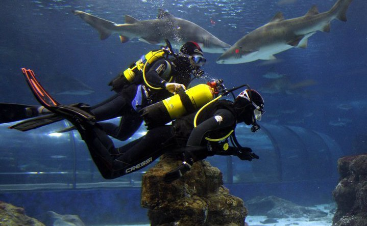 diving-with-sharks-in-aquarium-barcelona-amazing-oppourtunity