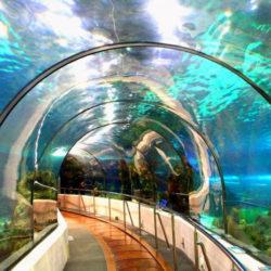 Akwarium w Barcelonie