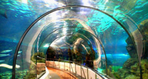 The Barcelona Aquarium