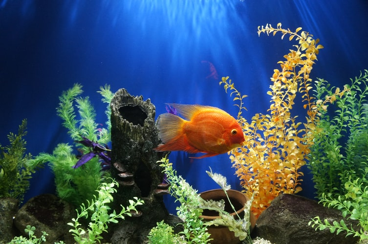 The Barcelona Aquarium - Barcelona Home