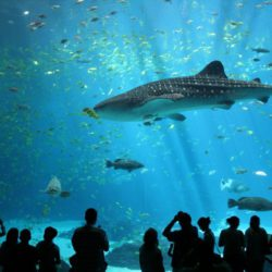 the-sharks-attracting-a-wide-rang-of-visitors-in-barcelona-aquarium
