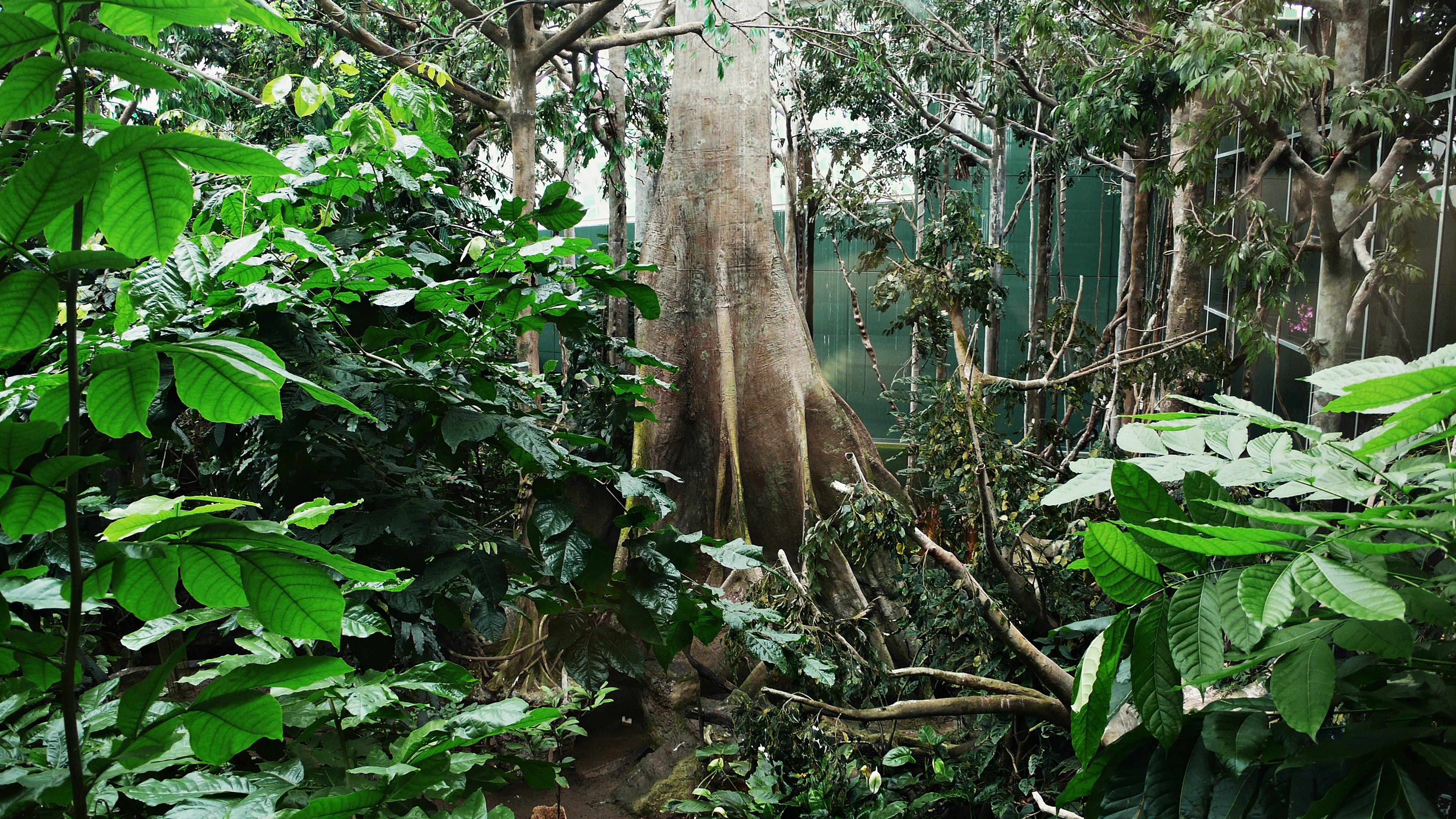 El_bosque_inundado_amazonico-cosmocaixa-2009_(2)