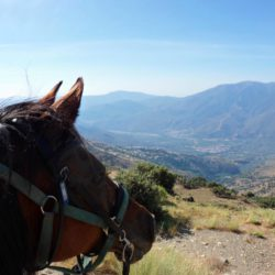 Horse Riding with Spectacular views in Barcelona Spain