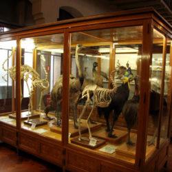 Inside Museu de Zoologia Barcelona Spain