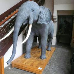 Museu de Zoologia Barcelona