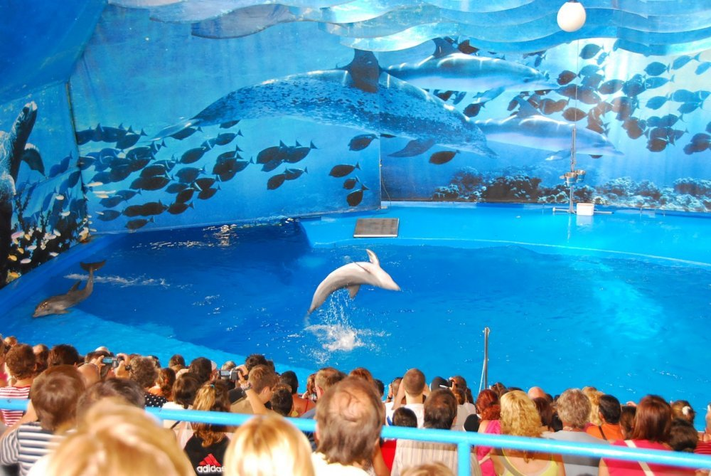Amazing Dolphin Dance At Barcelona Zoo Barcelona Home