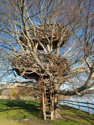 6.Lake_Nest _Tree _House