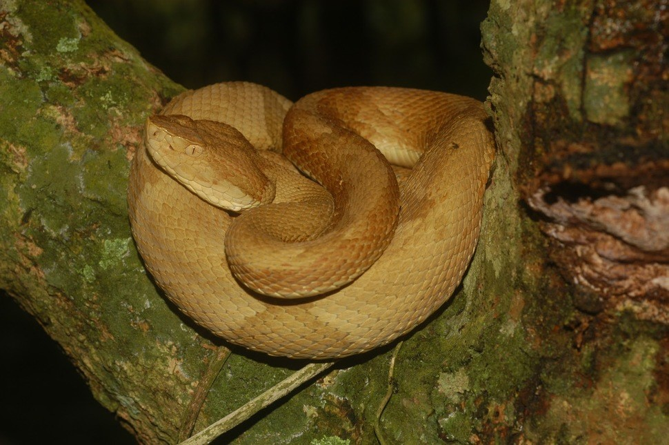 island-of-the-snakes-brazil