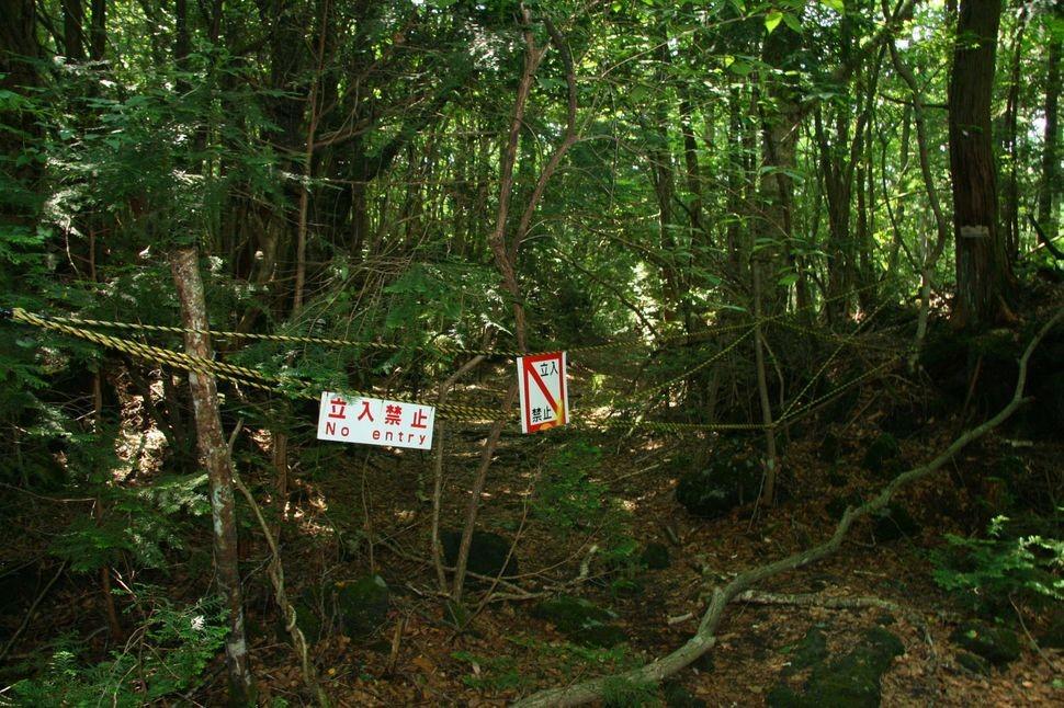 suicide-forrest-japan