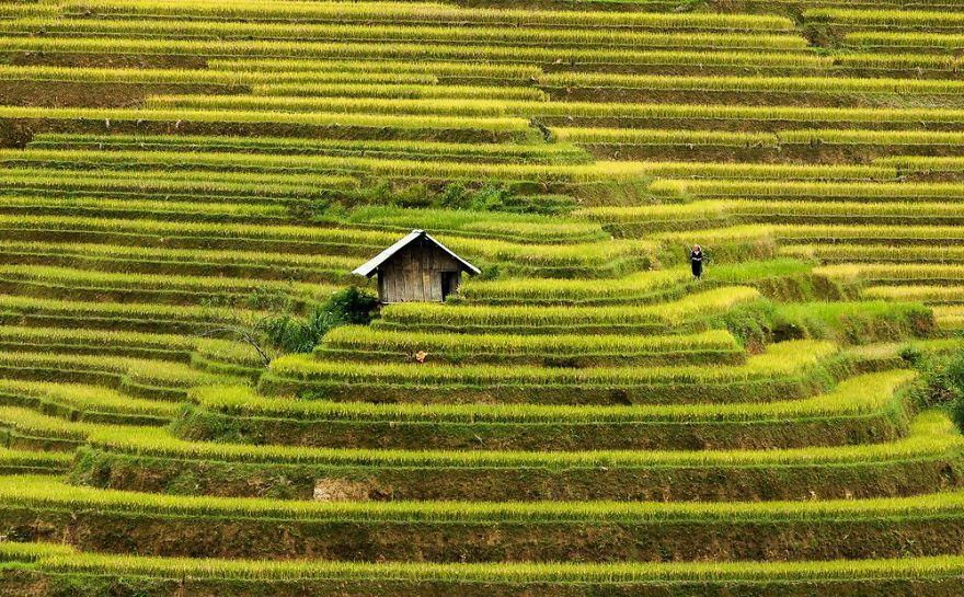 Rice terraces, Mu Cang Chai, Vietnam