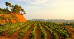 Wineries Around Sitges
