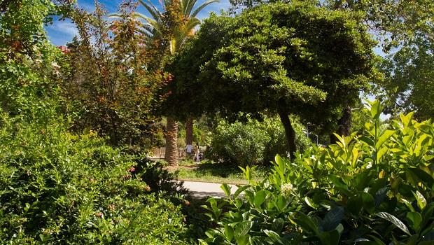 Vegetation in Parc de les Aigües