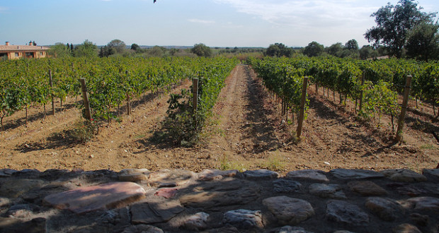 Vineyards of the Costa Brava
