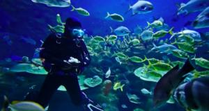 Diving in Costa Brava