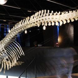 museu_blau_barcelona_c1