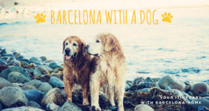 Barcelona with a dog