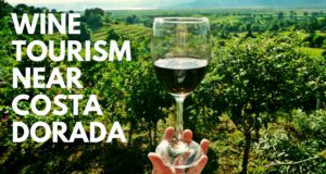 Wine tourism near Costa Dorada (1)