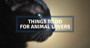 animal lovers barcelona