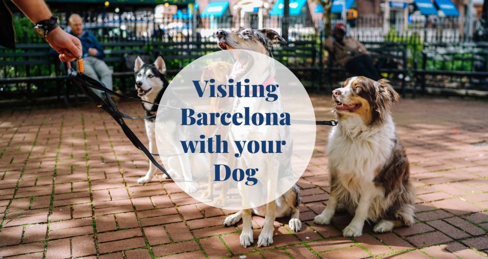 Dog - Barcelona-home