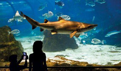 Stunning view of the underwater world