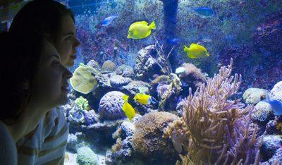 L' Aquàrium De Barcelona