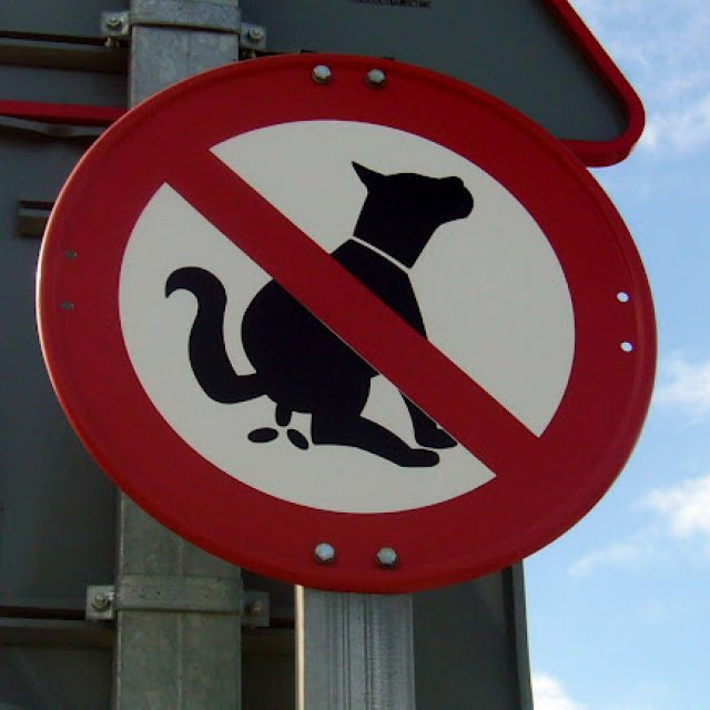 Catalan towns to conduct DNA analysis on dog feces